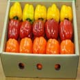 Paprika, sweet pepper